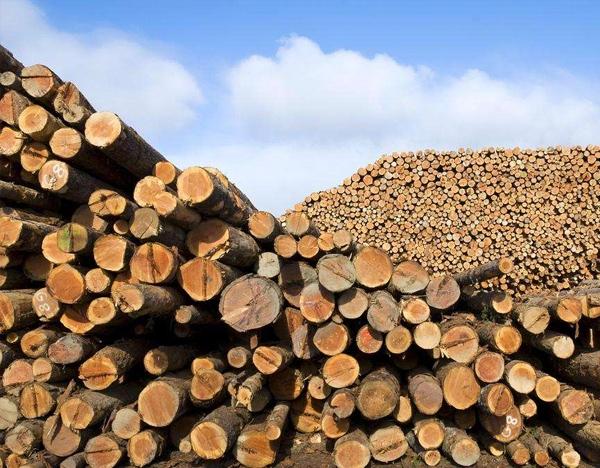 上海大不同木业科技有限公司告诉您:防腐木的生产规范?