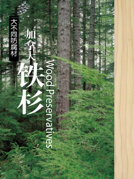 南通加拿大铁杉